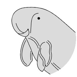 yoursay_native-species-dugong