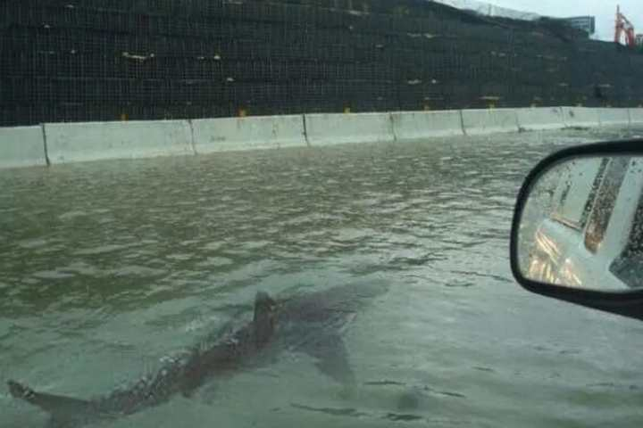 Photo of shark on a freeway