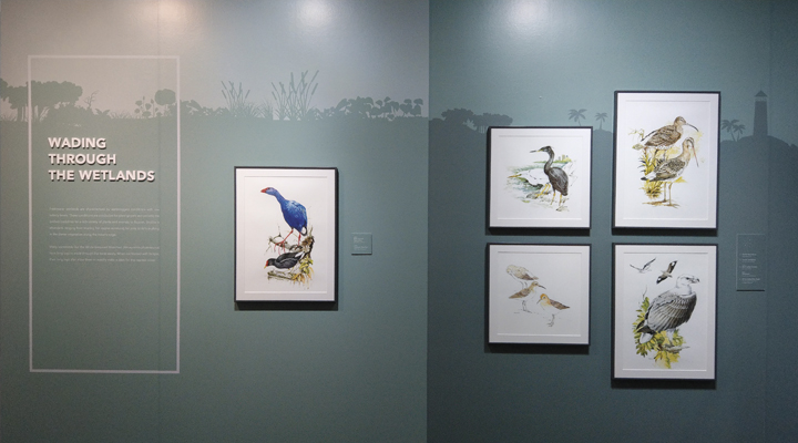 Illustrations of long-legged waterbirds