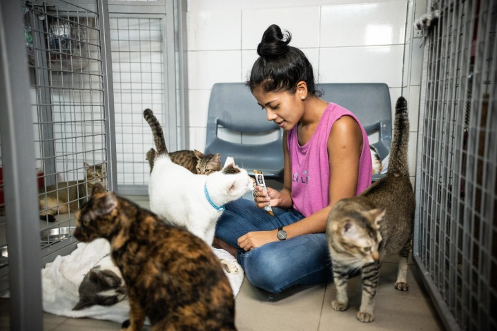 Sarah Hadi Devaraj volunteering at the Animal Lovers League with her cats.