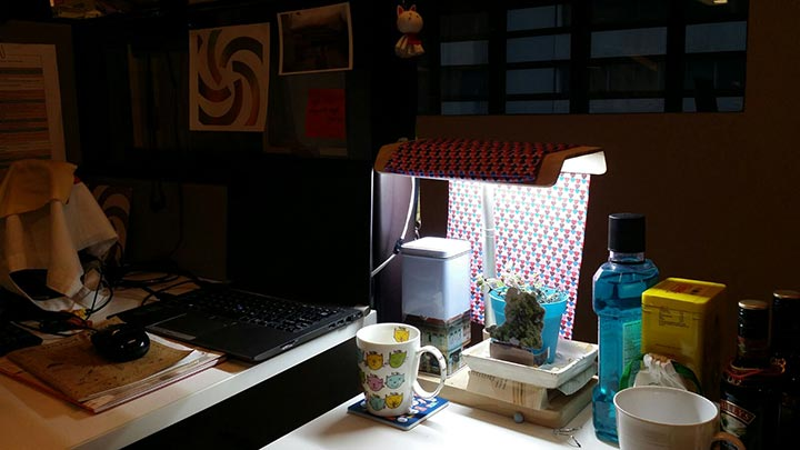 Genine's cluttered desk featuring a DIY plant-growing lamp.